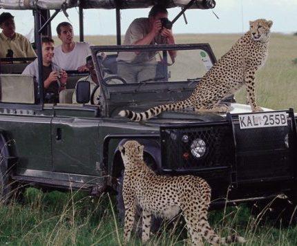 Kenya Mara Wonders